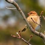Bird on a Branch, Niagara