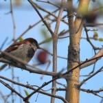 Birds Through Branches, Niagara